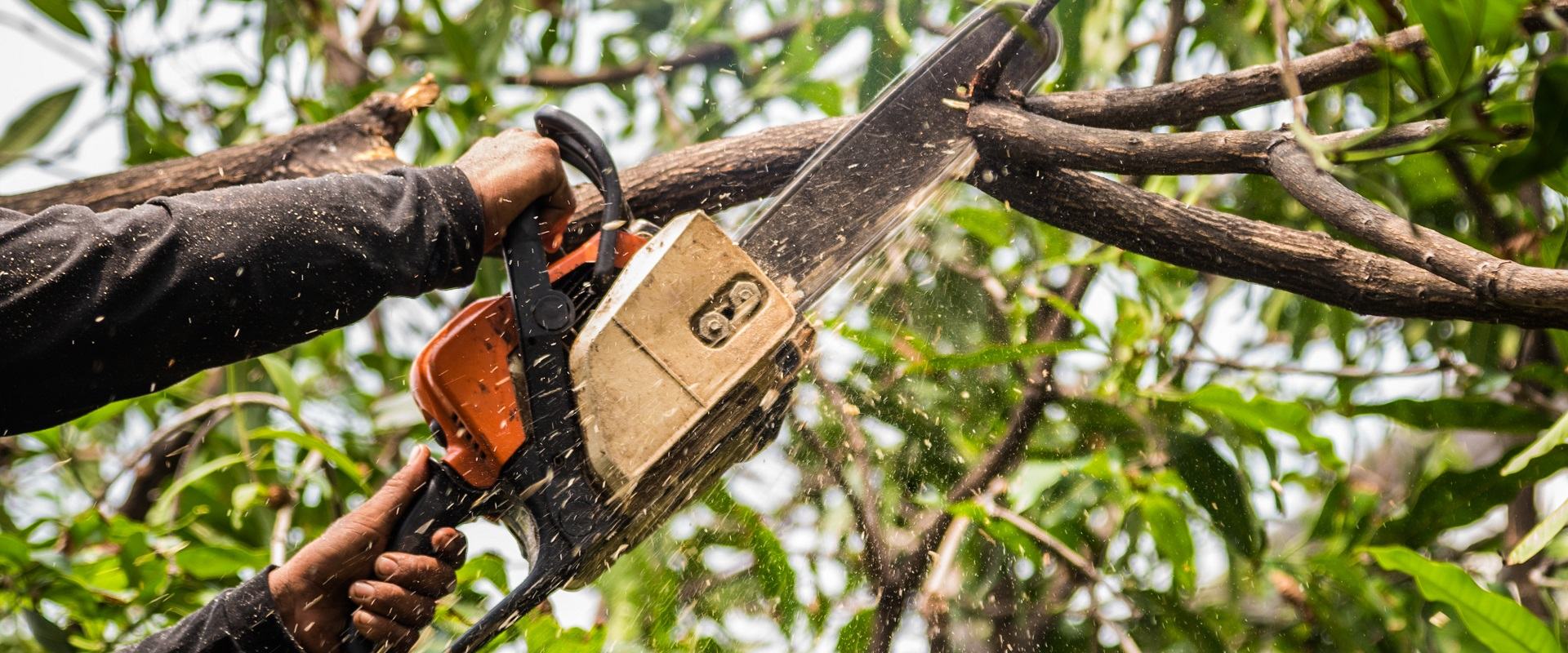 What Are The Dangers of Taking Down A Tree Without A Professional?
